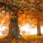 autumn-landscape-with-tree-in-sunlight-5FMY687-1024×689